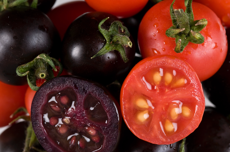 The purple tomatoes developed in this study that are enriched in anthocyanins, and the progenitor red tomato variety.