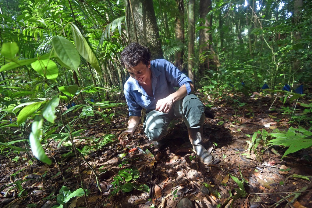 Smithsonian postdoctoral fellow and co-author of the study, Paul-Camilo Zalamea recovers seeds buried in the forest of Barro Colorado Island, Panama, to study the fungi that might have colonized them.