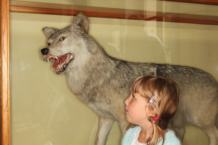 Science is instrumental to demystify the perception of the wolf in society.